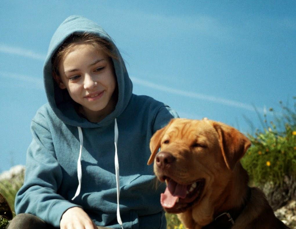 White god sinfonia per hagen il film sulle minoranze for Lavorare con i cani